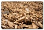German market opens for contaminated waste wood