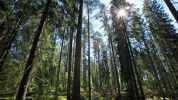 WWF Russia and UPM release guidelines on sustainable forest management for wood suppliers